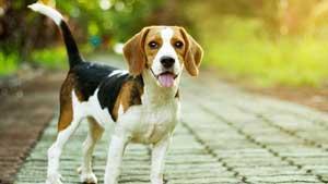 Dog.jpg.8681885f6d566a98cf9b7e11b2326095.jpg