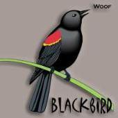 Blackbird52